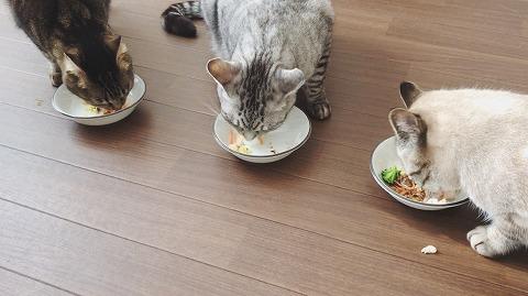 並んで猫用おせちを食べる猫たち