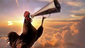 Pernah Dengar Ayam Jantan Berkokok Tengah Malam? Ternyata Begini Kata Rasulullah