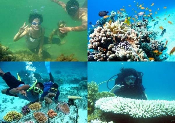 Những địa điểm lặn ngắm san hô tuyệt đẹp ở Đà Nẵng G6-e1431853053129
