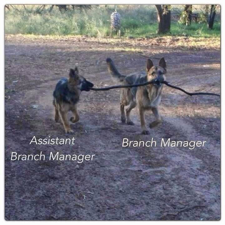 Funny Dog Branch Managers joke picture meme