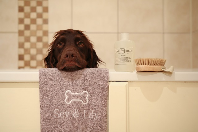 pamper evening for your canine