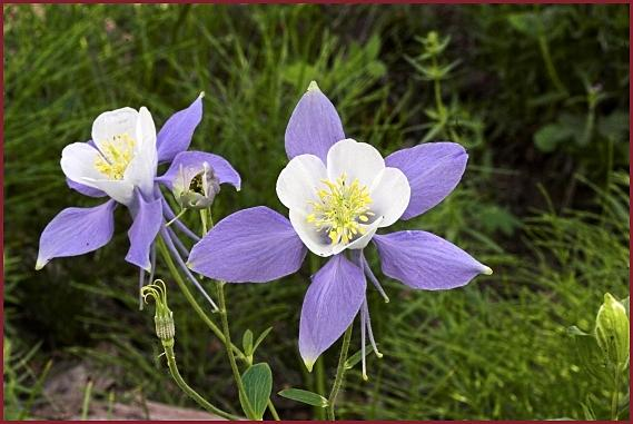 Wwe Wrestlers Profile: Colorado State Flower Rocky ...