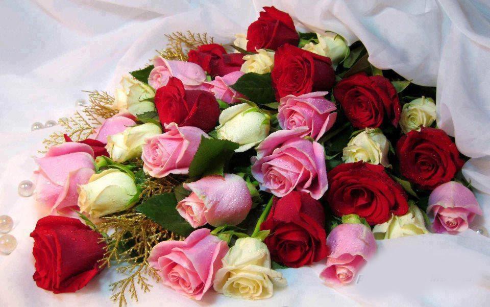 Hermosos Fondos De Rosas Y Flores Rojas Blancas Moradas Amarillas