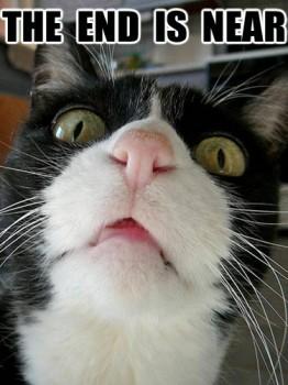 Apocalypticat, funny cat meme