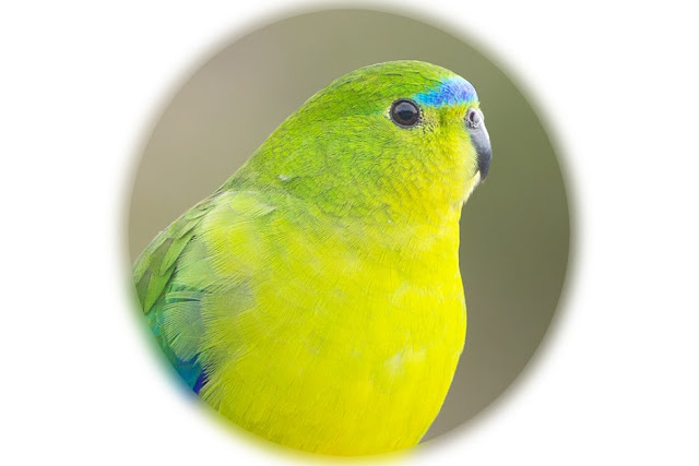 6 Best birds to have as pets – Best pet bird breeds
