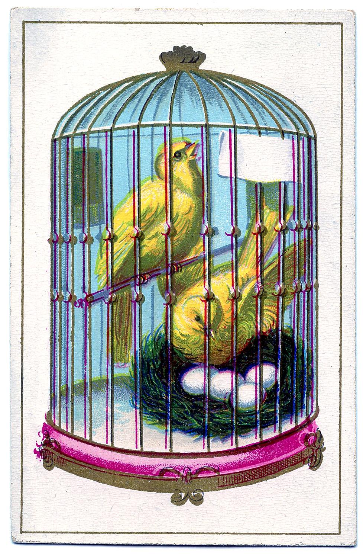 Птицы в клетке открытка