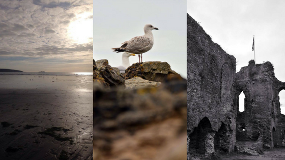 Wales, st david, ruins, church, beach, seagull, nature, animals, birds, wildlife