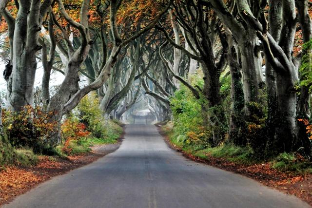Dark Hedges, el Camino Real de Juego de Tronos