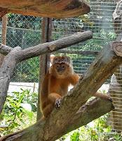 kebun binatang taman margasatwa ragunan