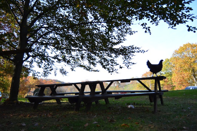 Free Range Chickens at Stonecrest Manor