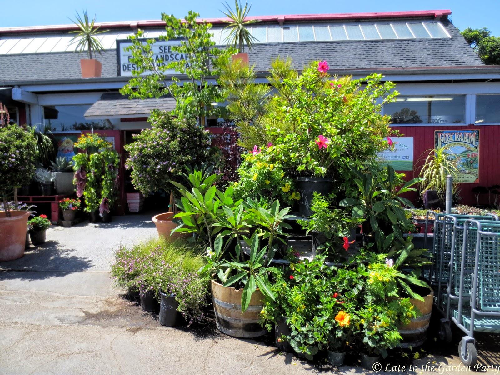 Late To The Garden Party Deep Roots Garden Center
