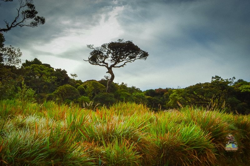 Horton Plains,Sri Lanka