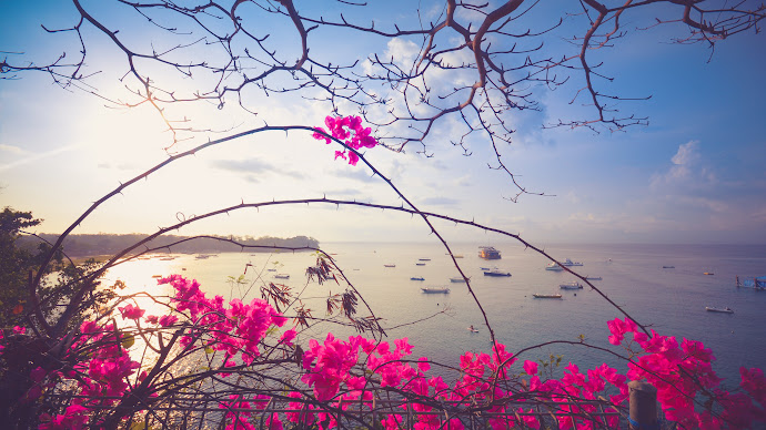 Wallpaper: Flowers, Blue Sky and Blue Ocean