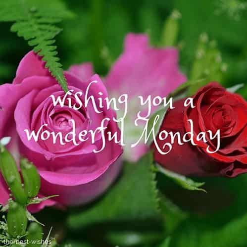 good morning wishing you a wonderful monday