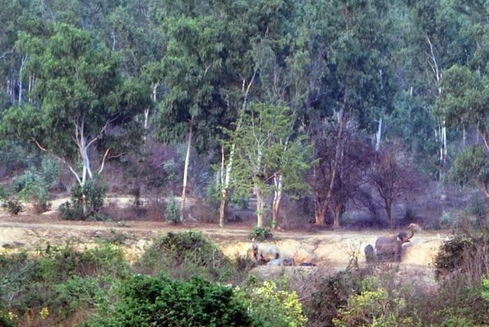 Elefanten im Kui Buri Nationalpark, Thailand