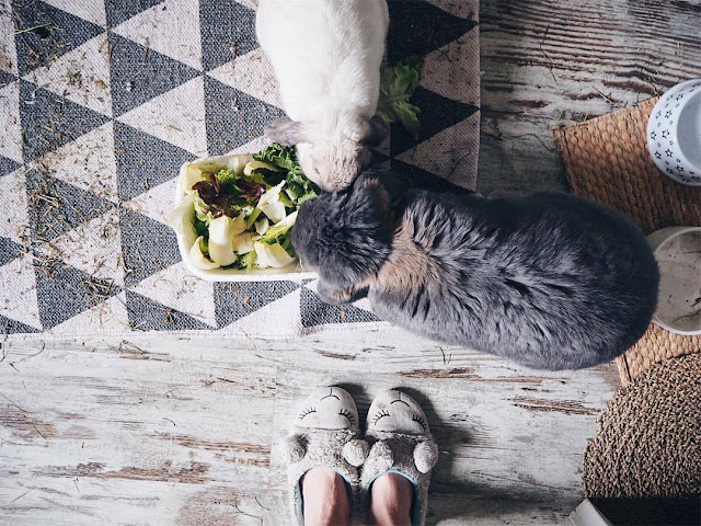 5 idées reçues sur les lapins de compagnie Sherlock et Lilas