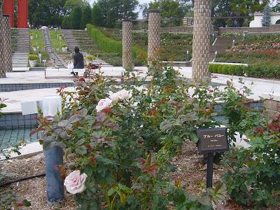 兵庫県伊丹市・荒牧バラ公園 ブルーバユー