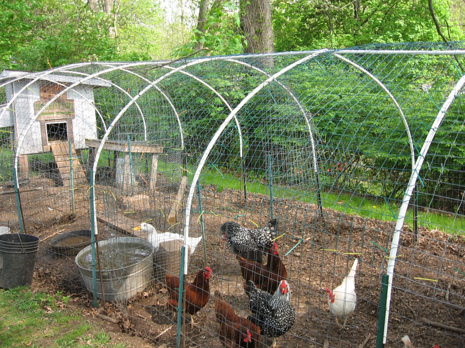 please help need to build chicken run fast and cheap