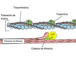 Función del metabolismo