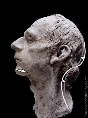 Глубокий шейный лордоз соответствует дорсальному положению нижней челюсти.