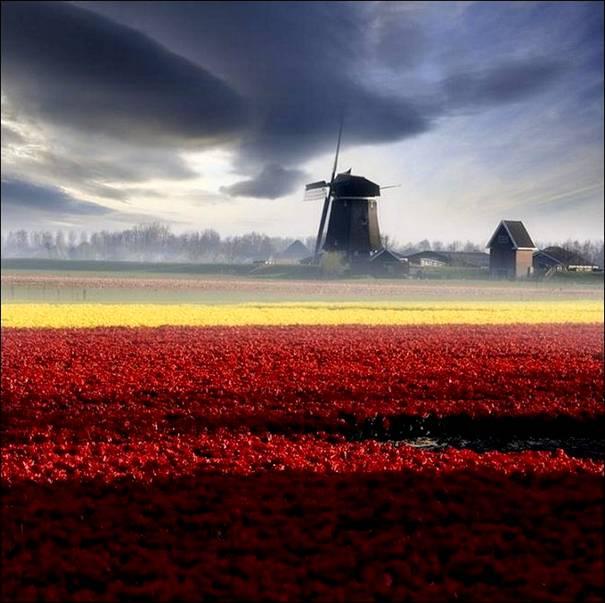 مزارع الزهور image019-768803.jpg