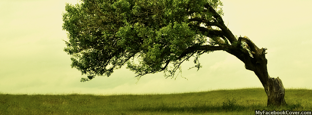 Tree Natural HD Color Wallpaper for Facebook Cover Image
