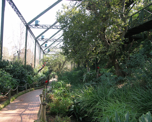 Inside the aviary