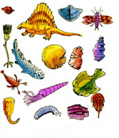 Organism - Animal diversity