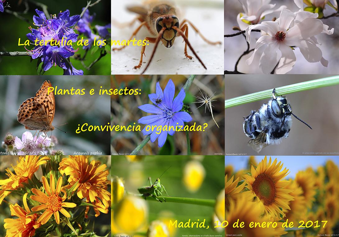 Aprendiendo con la vista fotograf as de flores e insectos - Plantas para ahuyentar insectos ...