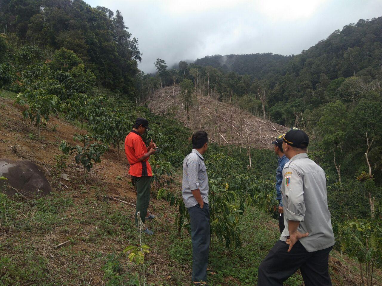 Puluhan Hektar Hutan Lindung di Lambar Dirambah