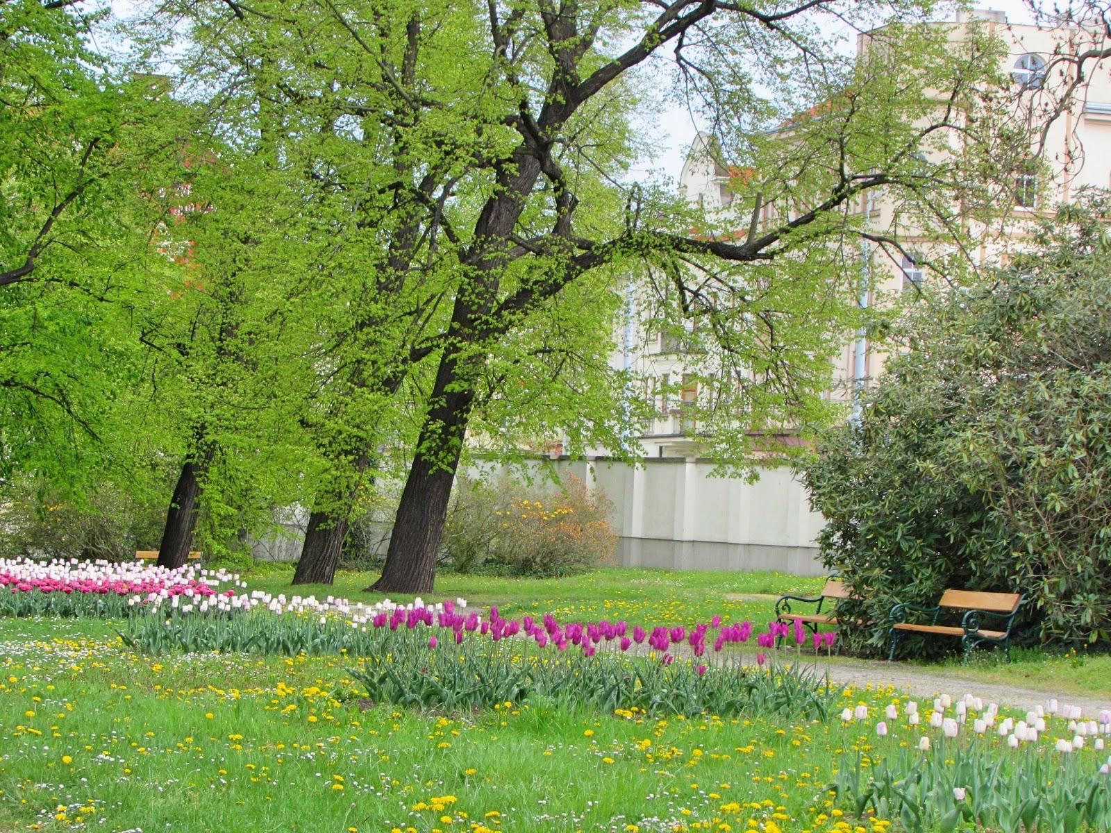spring garden pilsen flowers