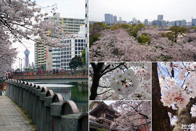 福岡市内のオススメ花見スポット