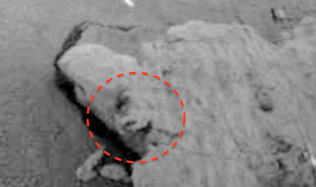Strange face found on rocky object in front of Mars Rover UFO%252C%2Bsighting%252C%2Bnews%252C%2Bnasa%252C%2Bsecret%252C%2Brover%252C%2Bface%252C%2Brock%252C%2Bcuriosity%252C%2BSol%2B63%252C%2Bstatue%252C%2Bbiology%252C%2Blife%252C%2Bdiscovery%252C%2Bnew%2Bscientist%252C%2BTIME%252C%2BNobel%2Bprize%252C%2BScott%2BC.%2BWaring%252C%2BUFO%2BSightings%2BDaily%252C%2B1