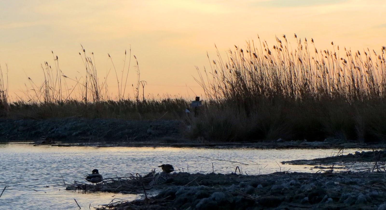 Resultado de imagen de barraca la albufera patos antigua