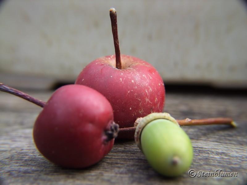rote Zieräpfel