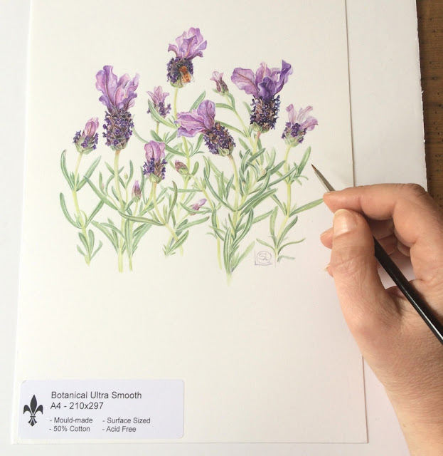 Artist Shevaun Doherty's hand with brush and a watercolour painting of Spanish lavender