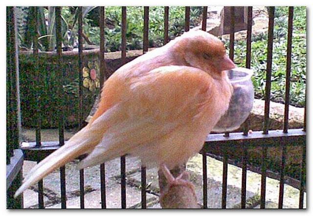 Cara Agar Burung Tidak Mudah Sakit