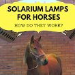 Solarium Lamps for Horses - How Do They Work?