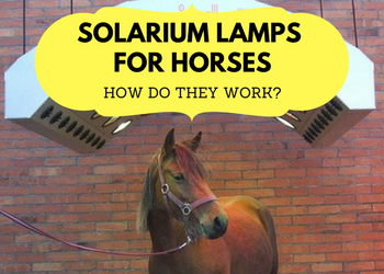 Solarium Lamps for Horses – How Do They Work?