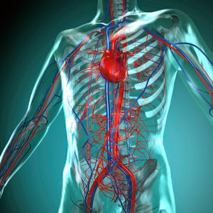 http://www.argosymedical.com/Circulatory/samples/animations/How%20the%20Heart%20Works/How%20the%20Heart%20Works.swf