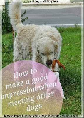 How To Make A Good First Impression When Meeting Other Dogs