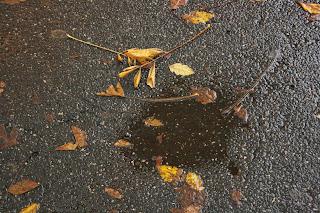 Foglie e asfalto bagnati sulla Circonvallazione Ostiense