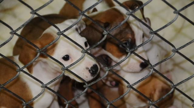 Rescue Network Sends Southern Puppies North