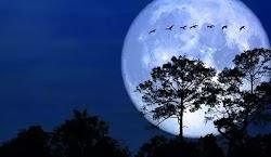 Ονομάζεται «Full Cold Moon». Αυτό το φαινόμενο συμβαίνει όταν ο φυσικός μας δορυφόρος συμπίπτει με το πλησιέστερο σημείο της τροχιάς του π...