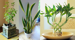7 φυτά που ελκύουν θετική ενέργεια στο σπίτι και το γραφείο μας
