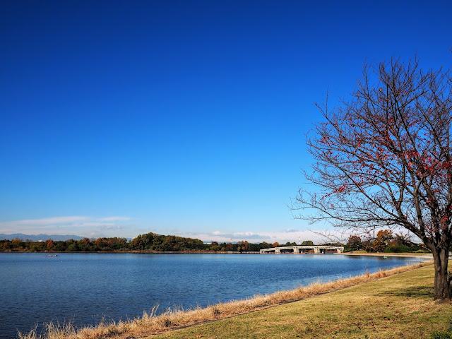 荒川 彩湖