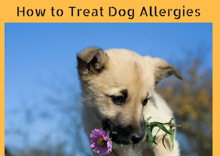 Different Approaches to Treat Dog Allergies