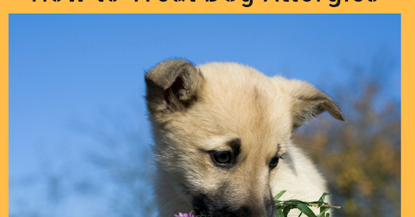 Different Approaches To Treat Dog Allergies Biographypedia
