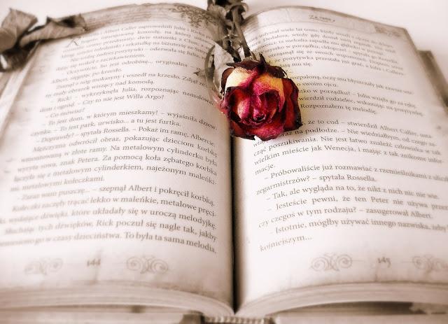 Rose and book Sant Jordi