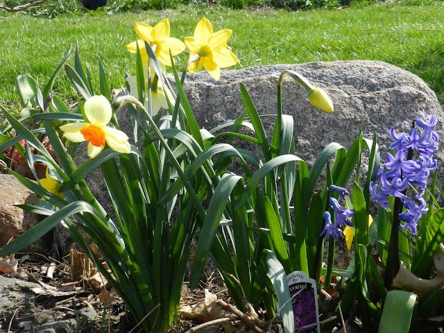 Spring Tease
